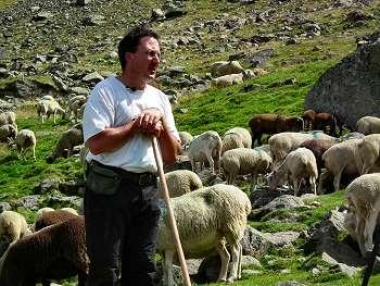 Vente directe viande mouton agneau des Pyrénées