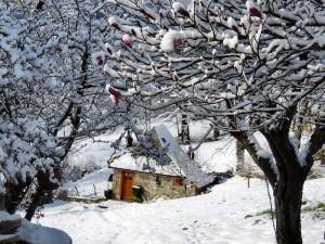 Blotti dans la neige