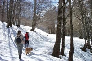 Promenade en montagne